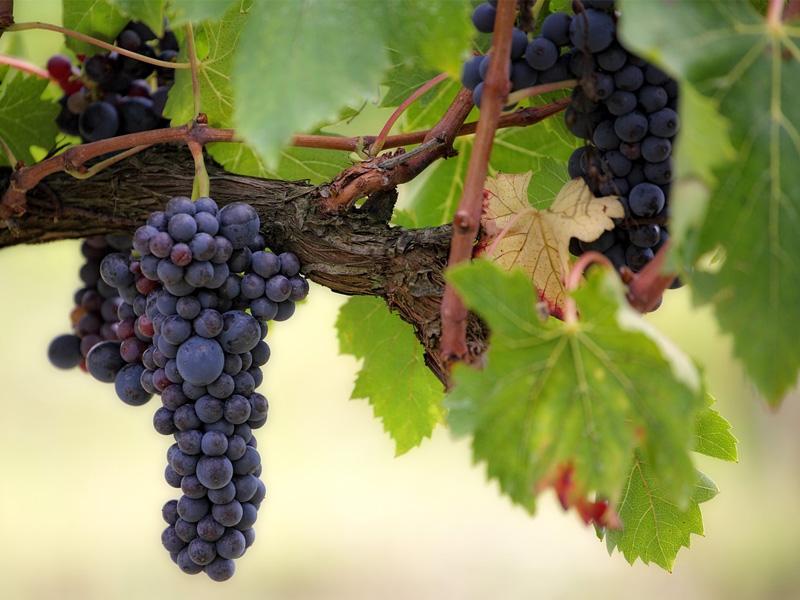 Nos vins - Caves Tour'Billon à Pont-de-Beauvoisin Savoie